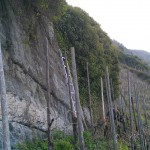 Freigelegter Felsen